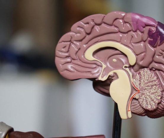 Mózg kobiety jest młodszy od mózgu mężczyzny