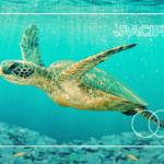 Karta mastercard pacific.org